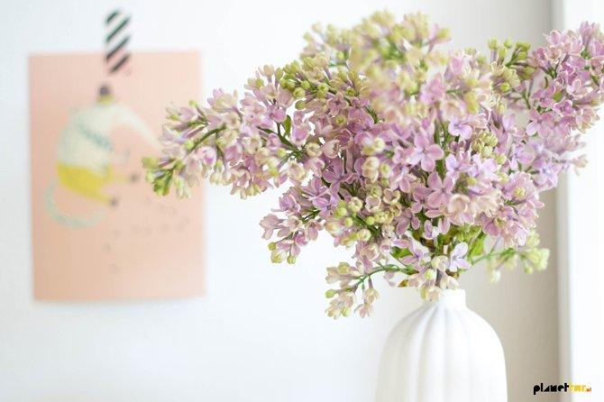 Home flora - Lilac