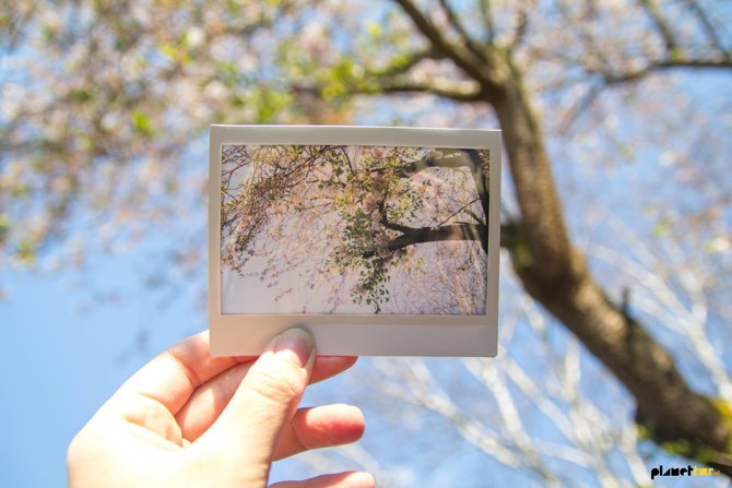 Polaroid - Blossom