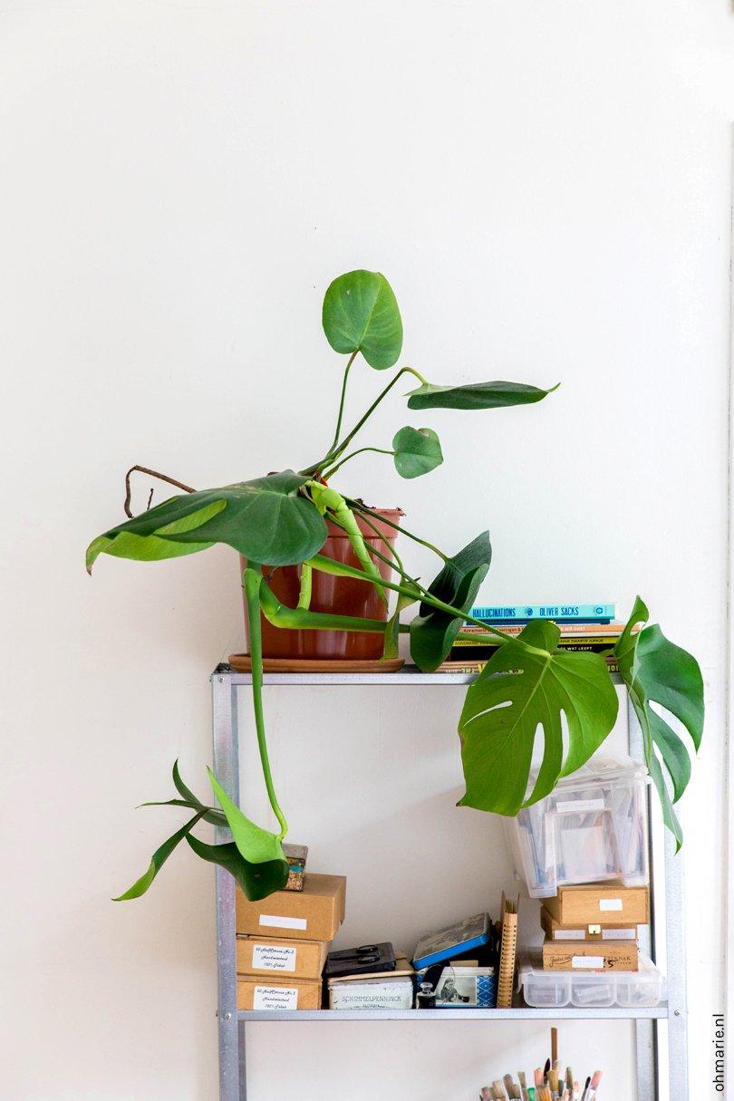 Binnenkijken in een plantenasiel - Oh Marie!