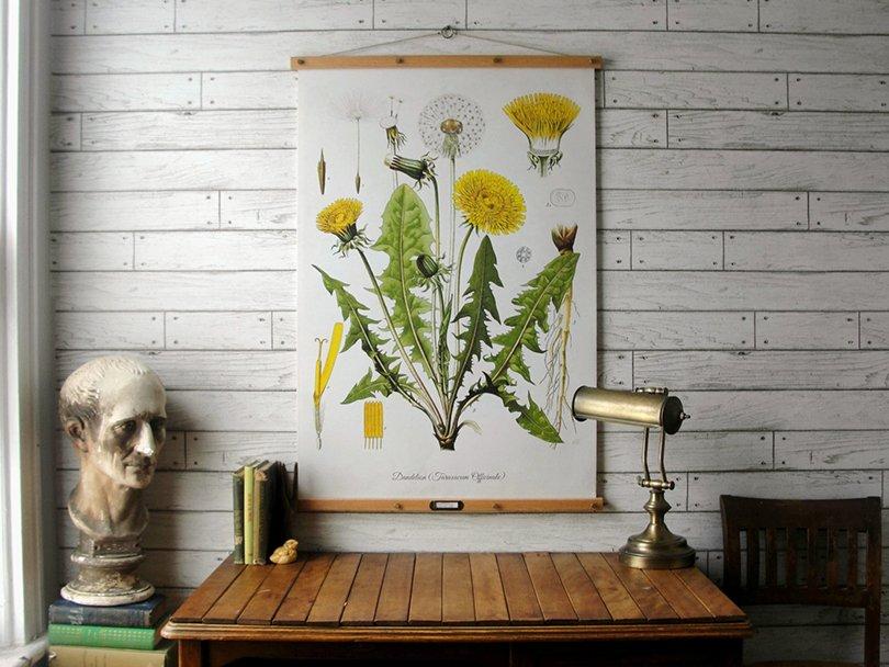 Dandelion Botanical Chart - GrittyCityGoods on Etsy