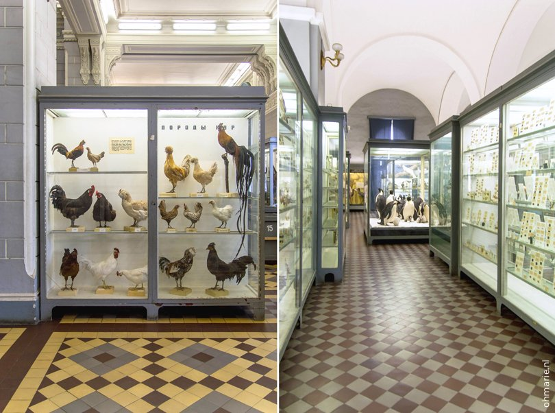 zoological museum st petersburg russia - Oh Marie!