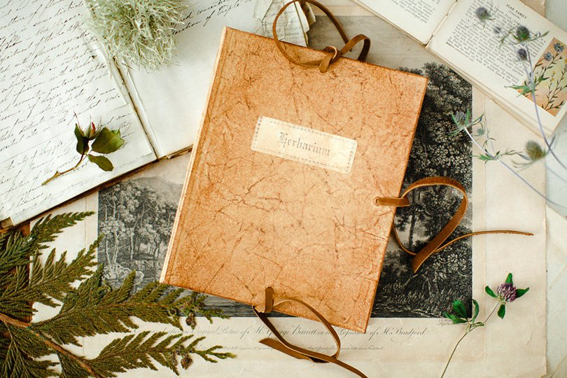 Herbarium Guide - talesofthewild on Etsy
