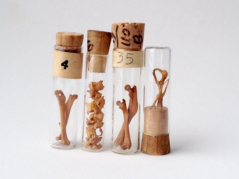 Specimen Collection in Vintage Vials - PULPmiscellania on Etsy