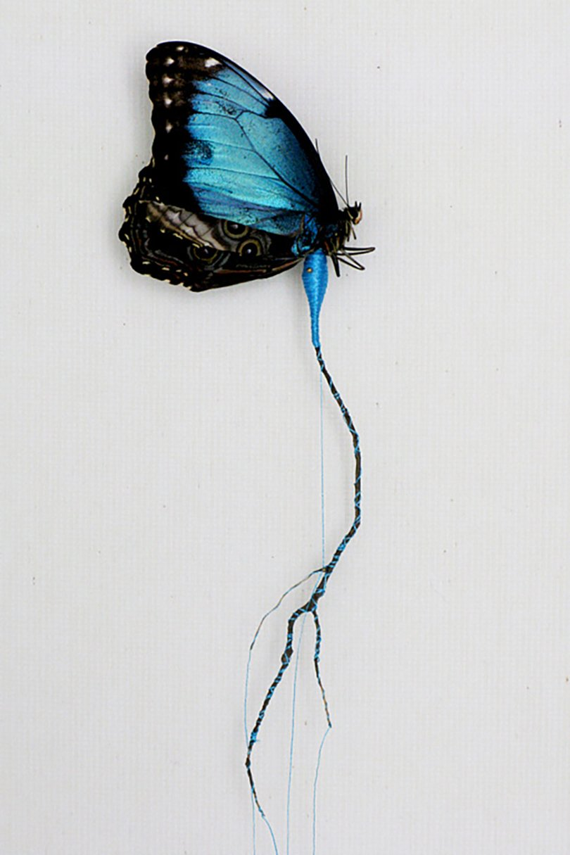 Anne ten Donkelaar broken butterflies
