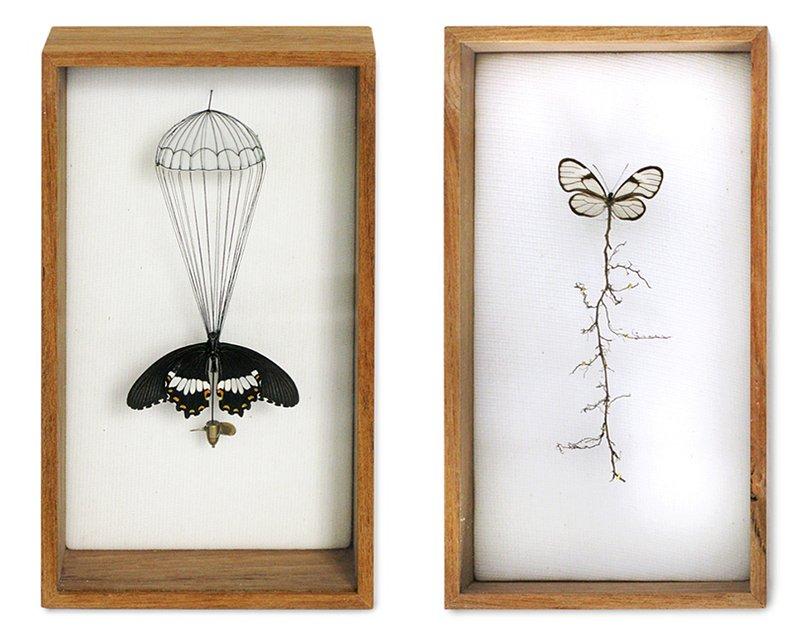 Anne ten Donkelaar broken butterflies