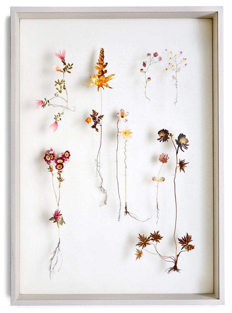 Anne ten Donkelaar flower constructions15