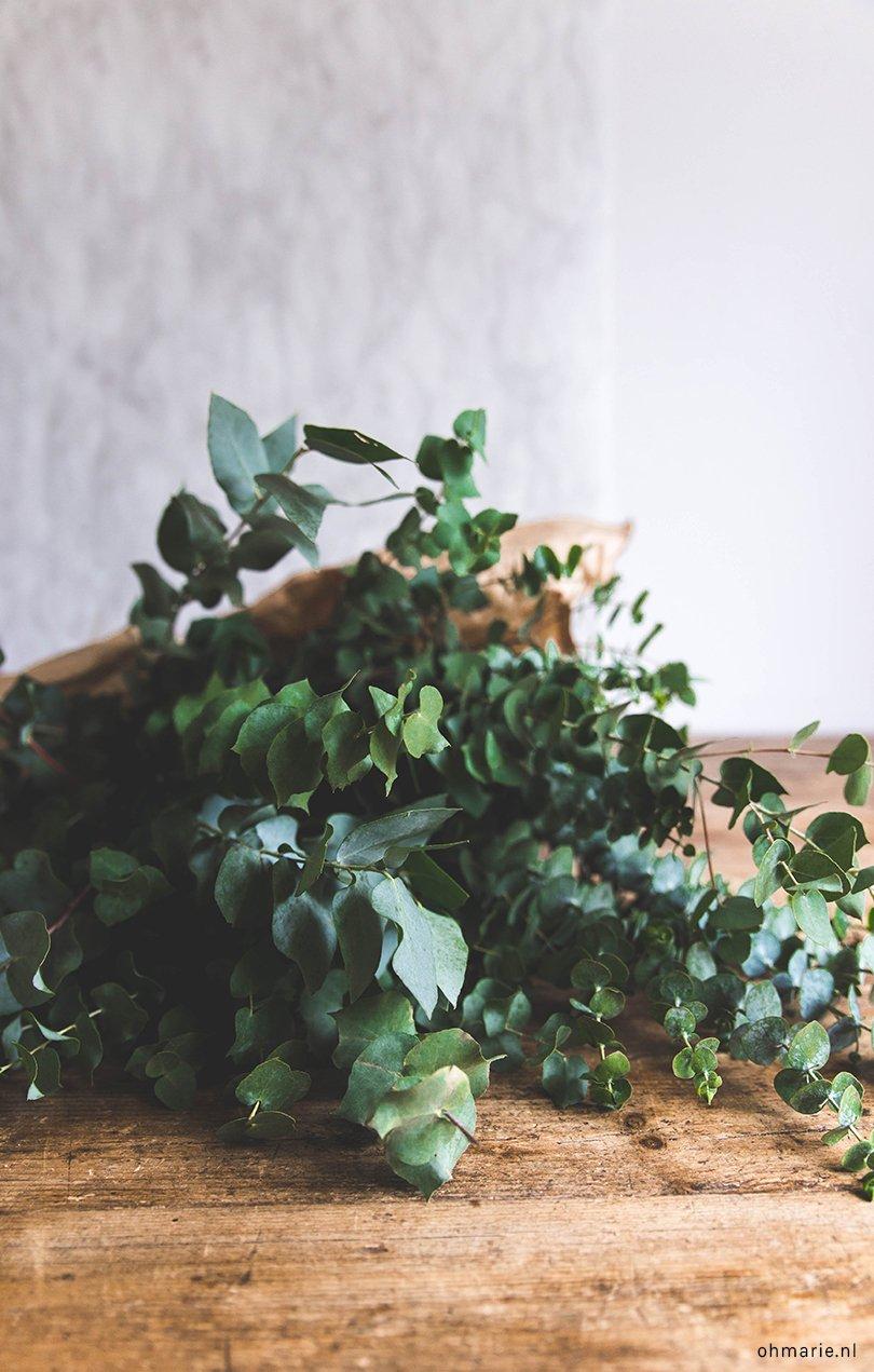 eucalyptus - Oh Marie!