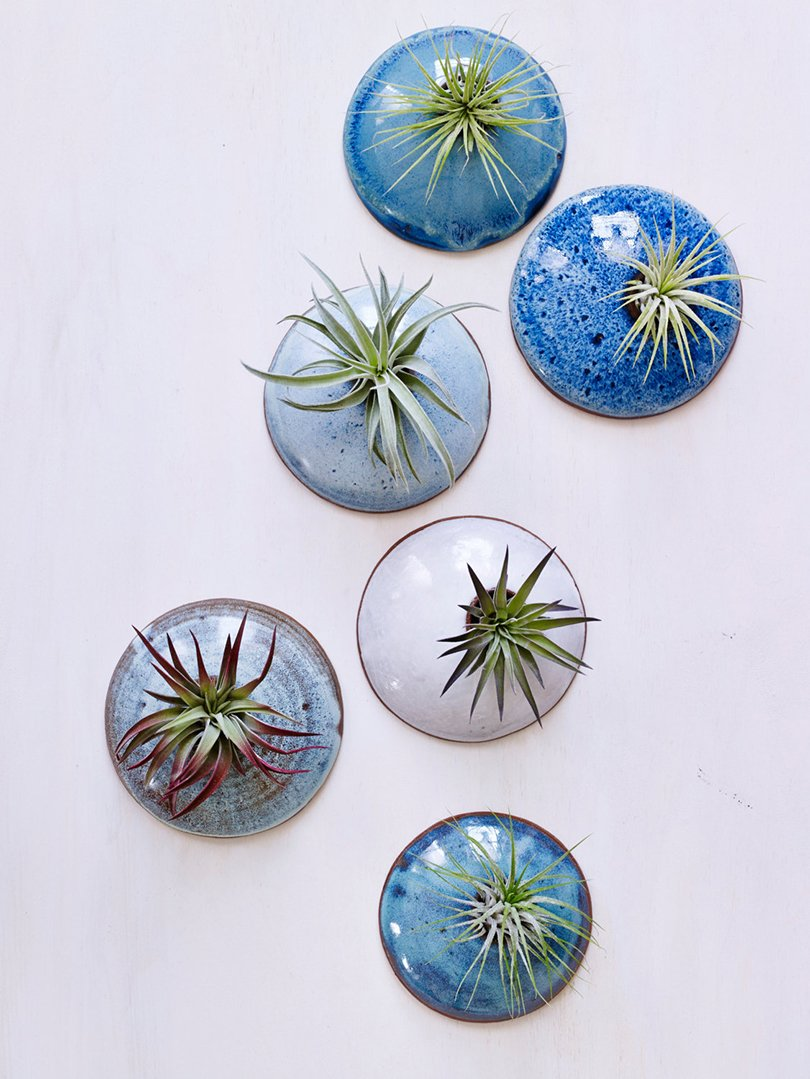 Wall Planters for Air Plants in Ocean tones - corpottery on etsy